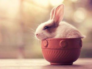 Всего понемножку. Сегодня — кролики!. Ярмарка Мастеров - ручная работа, handmade.