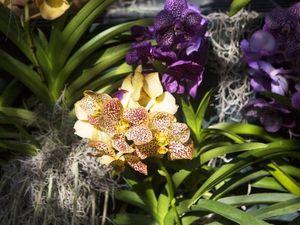 В Нью-Йорке открылось Шоу Орхидей с инсталляциями Daniel Ost. Ярмарка Мастеров - ручная работа, handmade.