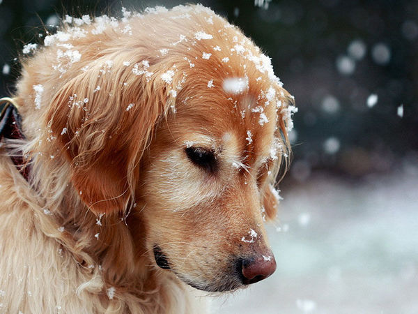 Собака нам - друг!!!! А мы собаке? | Ярмарка Мастеров - ручная работа, handmade