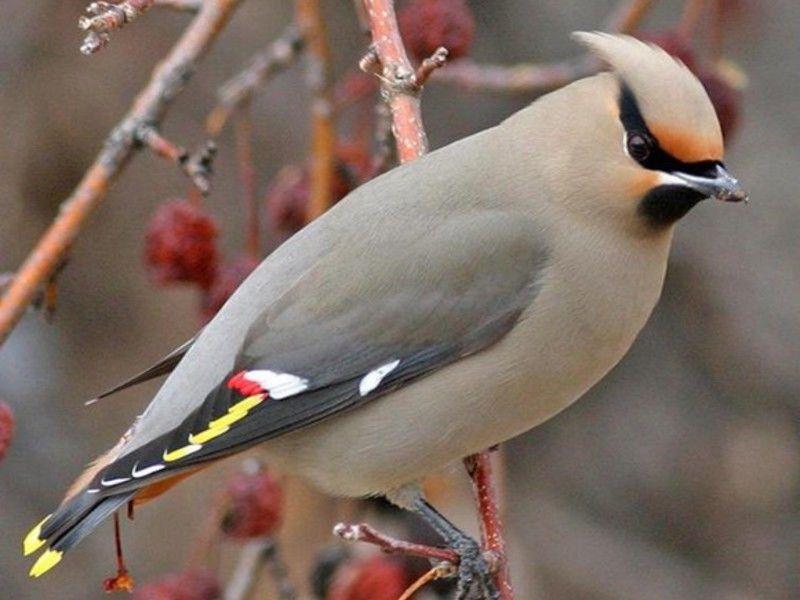 птицы, вышивка гладью