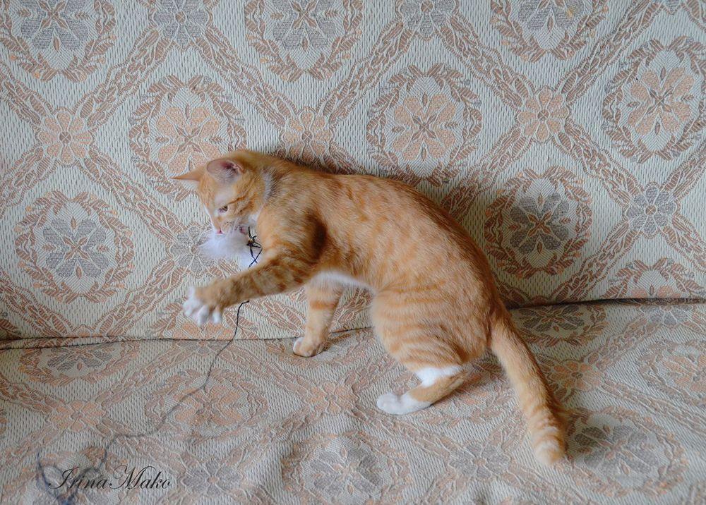 Котячьи поигрушки, фото № 2