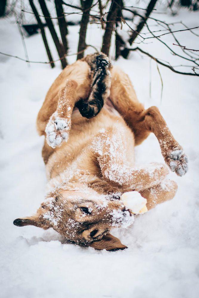 собака в дар, щенки в хорошие руки