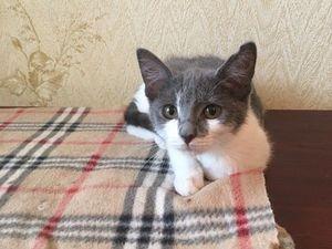 Котенок -девочка 3 месяца только в добрые руки Москва. Ярмарка Мастеров - ручная работа, handmade.