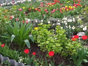 Картинки из сада — май, всё в цвету!. Ярмарка Мастеров - ручная работа, handmade.