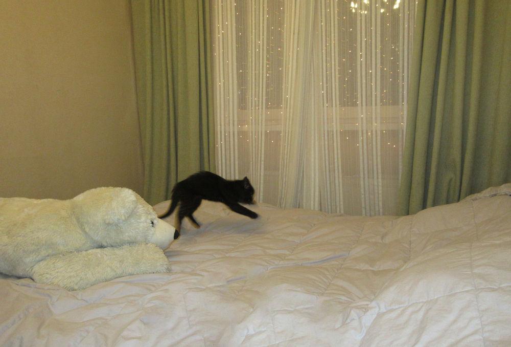 кошка в доме, что это было