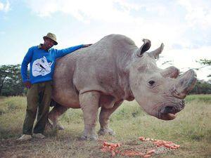 Про свитеры Rhino's dream и последних северных белых носорогов | Ярмарка Мастеров - ручная работа, handmade