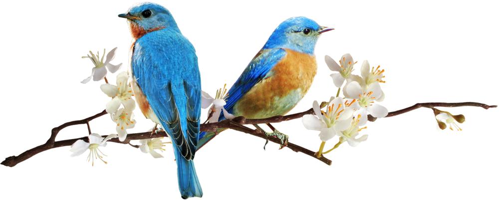 весенний подарок, весеннее настроение, весенние цветы, скидки на одежду, туника вязаная