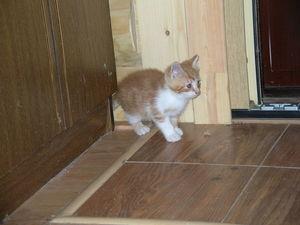 Чудесные котятки | Ярмарка Мастеров - ручная работа, handmade