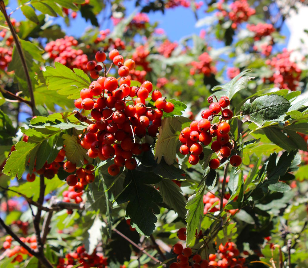 яркая ростовская Осень, фото № 4