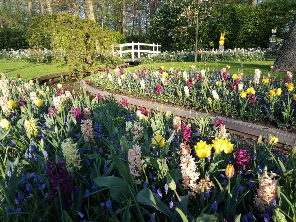 Тюльпановый бум — фоторепортаж с фестиваля цветов из Сада Европы