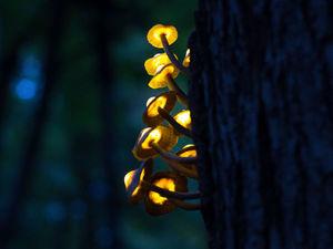 Создаем композицию «Волшебные светящиеся грибы». Часть 1. Ярмарка Мастеров - ручная работа, handmade.