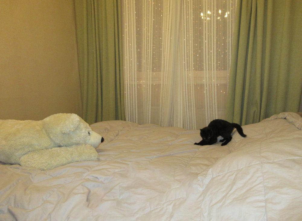 каждому дому по кошке, кошка мышка