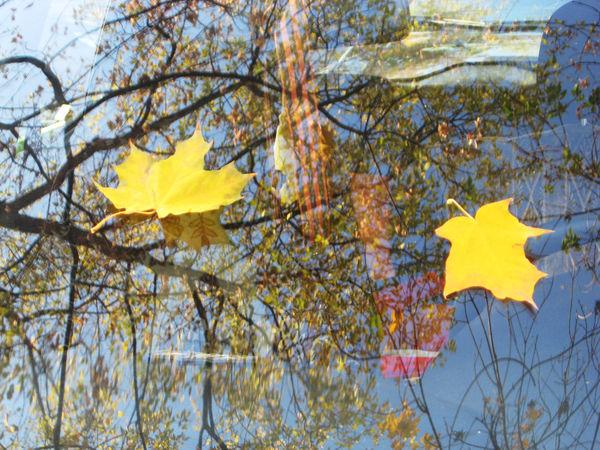 Люблю осень... | Ярмарка Мастеров - ручная работа, handmade