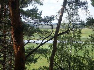10 целебных лесных ароматов для поддержки до отпуска. Ярмарка Мастеров - ручная работа, handmade.