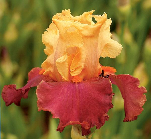 ивовый желтый, вязаное украшение