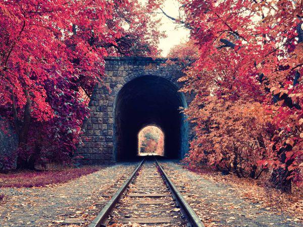 Щедрая Осень! Последнй день! | Ярмарка Мастеров - ручная работа, handmade