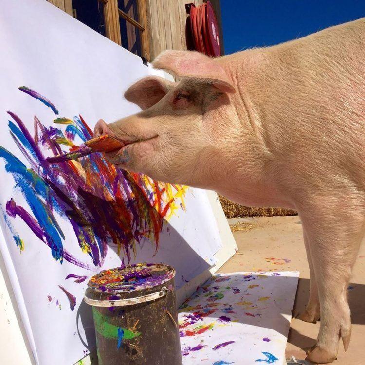 Свинка Пигкассо. Единственная в мире свинья-художник