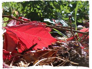 Ведьмины прогулки: слайд-шоу 11. Осенние листья. Ярмарка Мастеров - ручная работа, handmade.