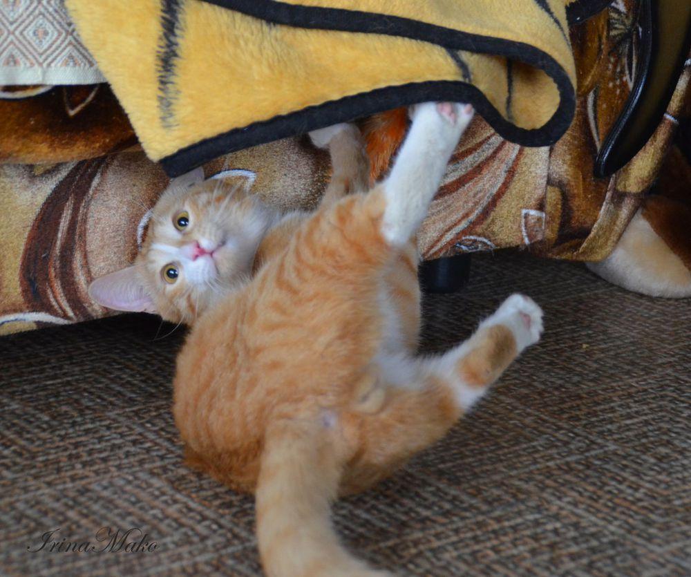 Котячьи поигрушки, фото № 6