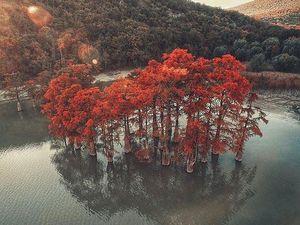 Кипарисовое озеро. Ярмарка Мастеров - ручная работа, handmade.