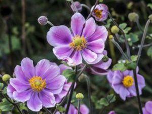 Встречаем весну!!!Дети-цветы... | Ярмарка Мастеров - ручная работа, handmade