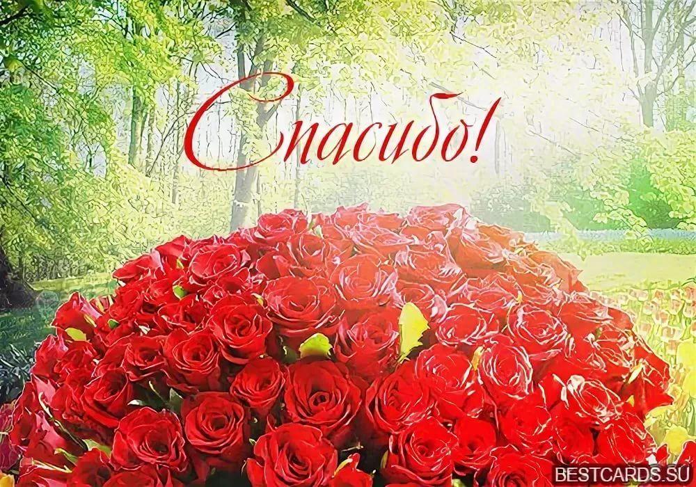 Открытки спасибо за розы