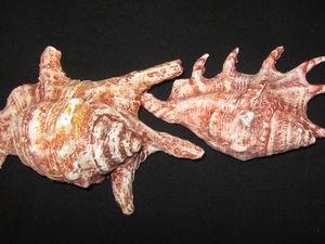 Создаем морские раковины из папье-маше. Ярмарка Мастеров - ручная работа, handmade.
