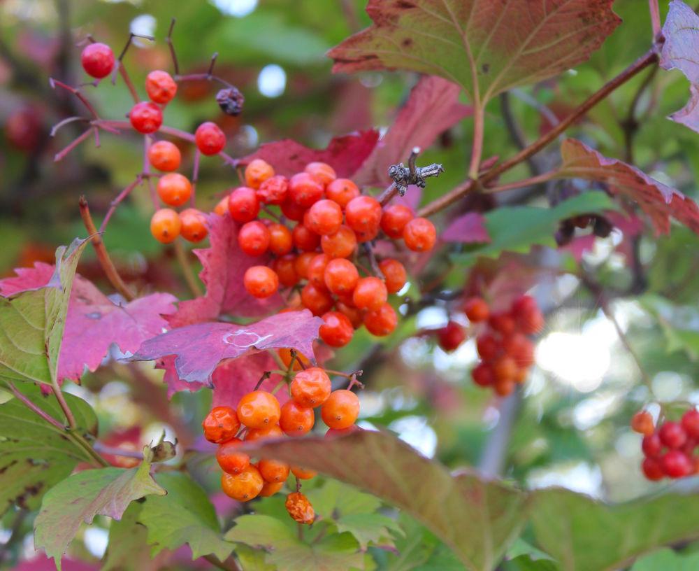яркая ростовская Осень, фото № 11