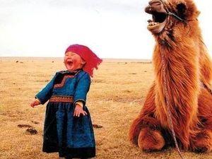 Пух Верблюда для Вашего Здоровья. Ярмарка Мастеров - ручная работа, handmade.