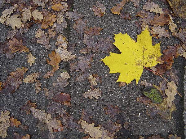 осень, привычки