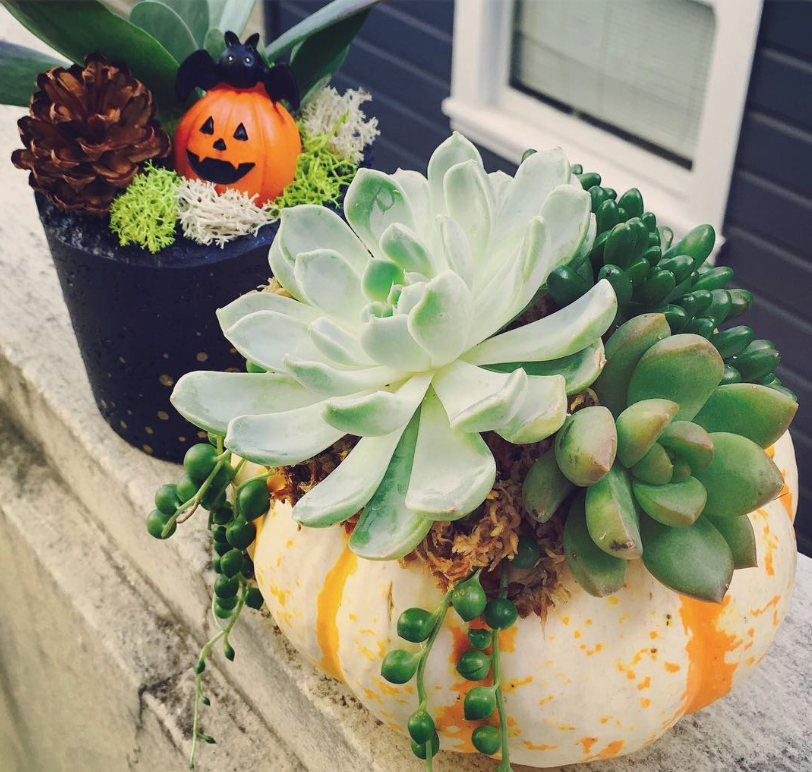 You'll Refuse to Carve Scary Pumpkins Seeing These Gorgeous Ideas with Succulents, фото № 10