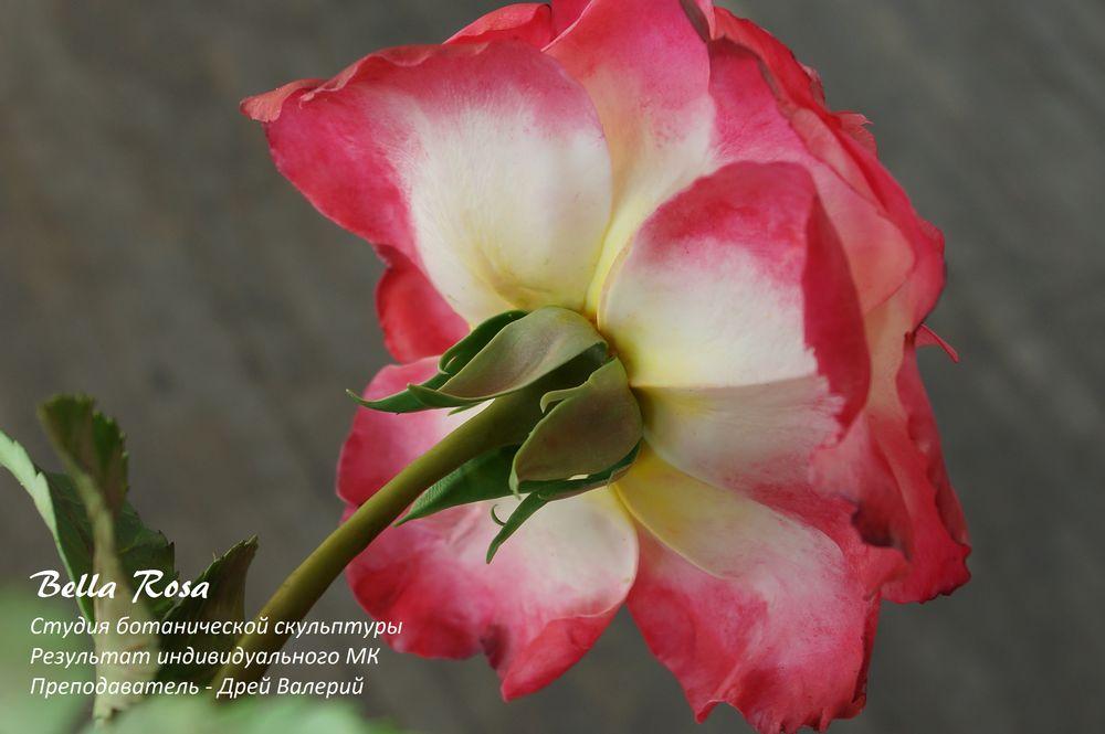мастер-класс, полимерная глина, лепка цветов, белла роза