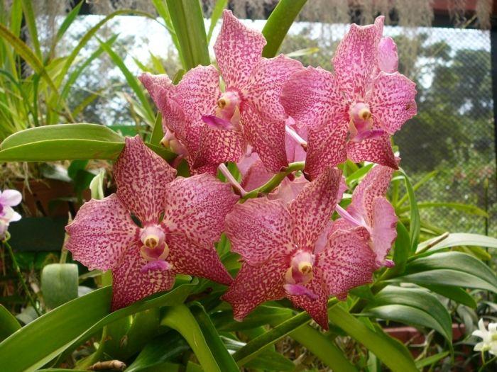 орхидея в косметике