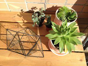Сад в горшке — делаем флорариум своими руками. Ярмарка Мастеров - ручная работа, handmade.
