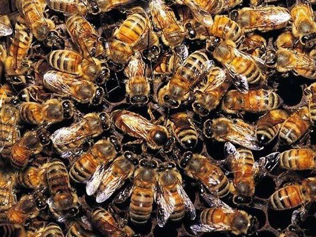 практика рэйки, мастерство, пчелы, процветание