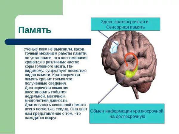 Зарядка для мозгов! Тренируем суперпамять и развиваем творческое мышление. Начинаю серию публикаций. | Ярмарка Мастеров - ручная работа, handmade