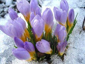 Весна!!!!!!!!!!!!!!!!! | Ярмарка Мастеров - ручная работа, handmade