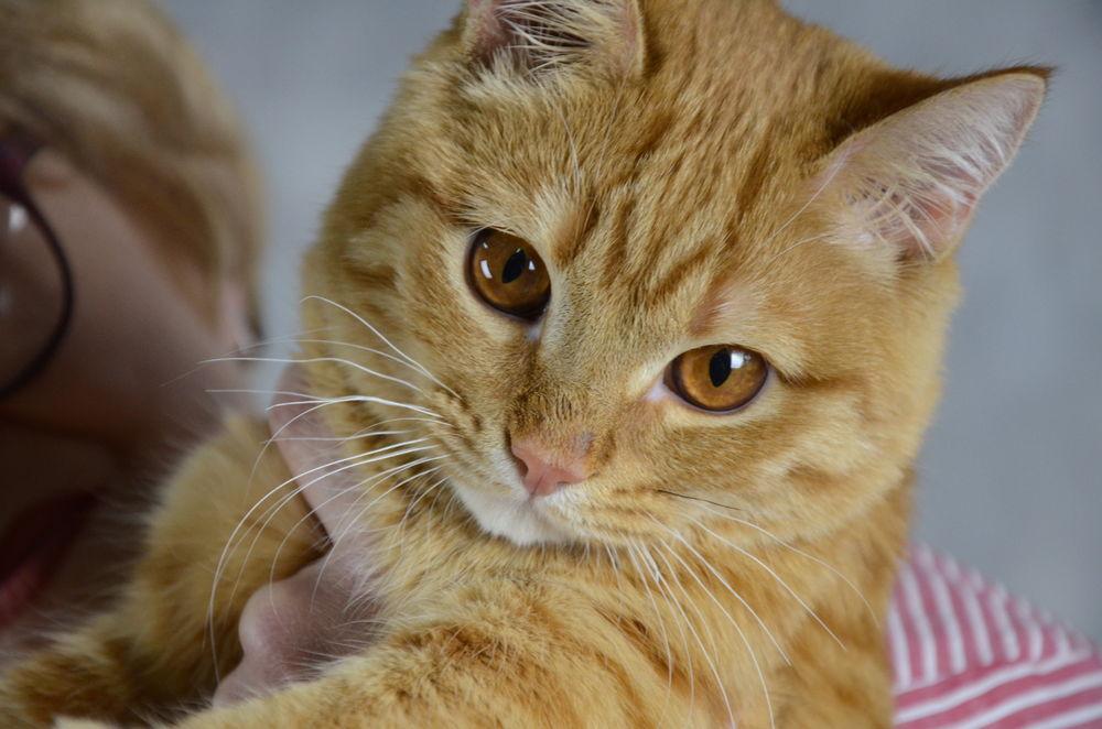 волонтер, помощь кошке, благотворительность