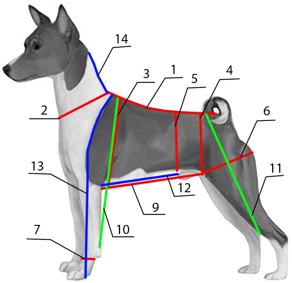 сверху картинка измерения собаки продолжал усердно