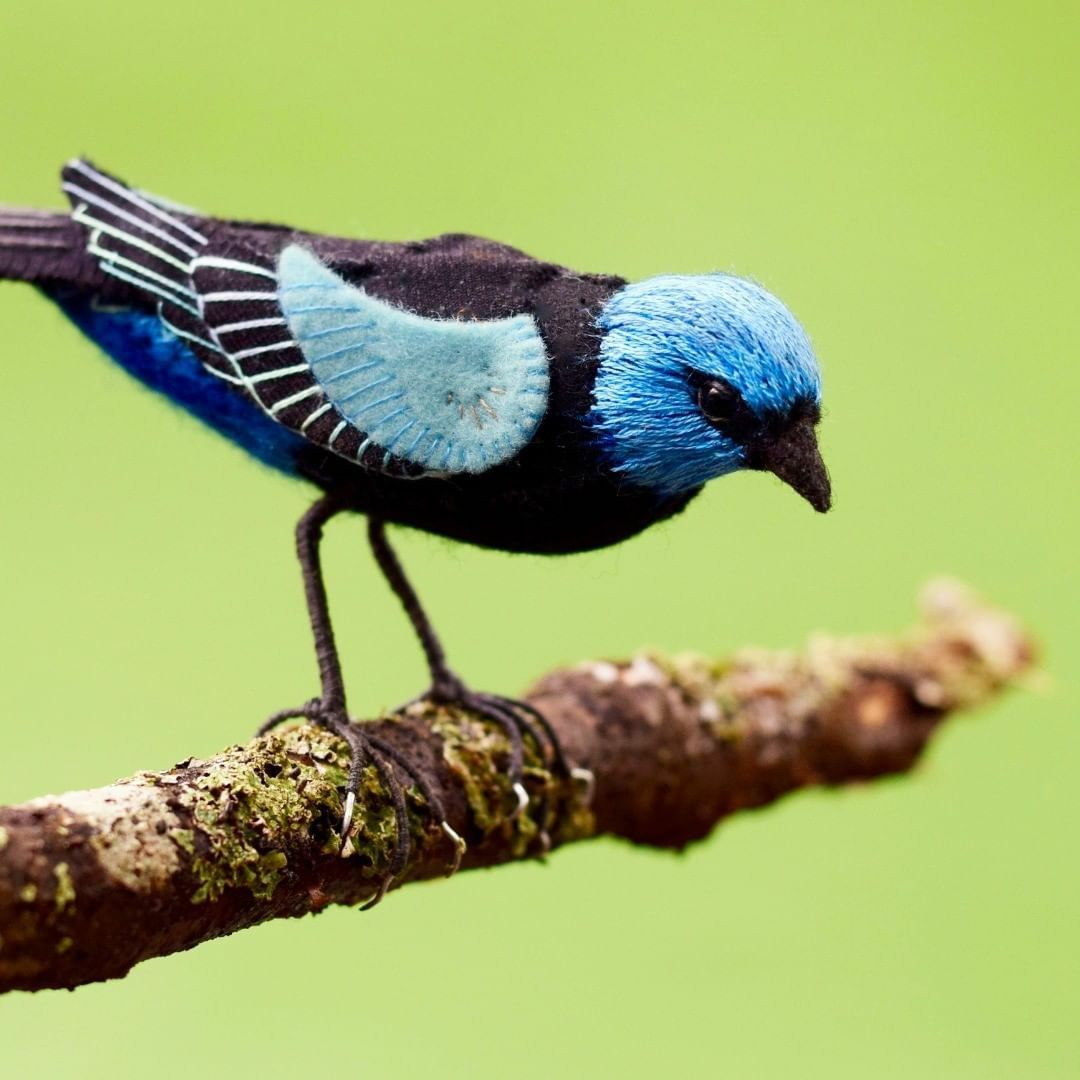 Красота птиц Австралии в реалистичных текстильных работах Jill Ffrench