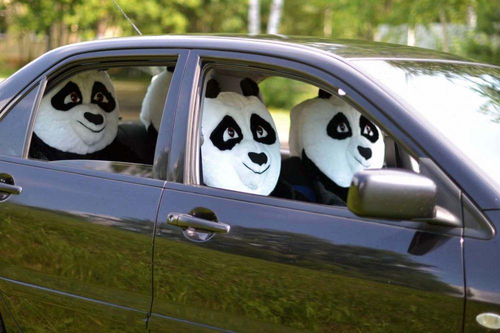 образ панды