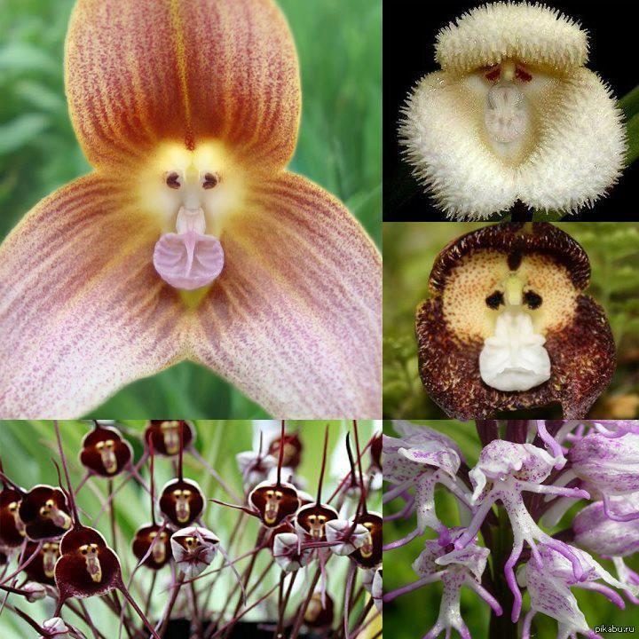 орхидеи, птицы, свадьба, новинки в магазине, белое