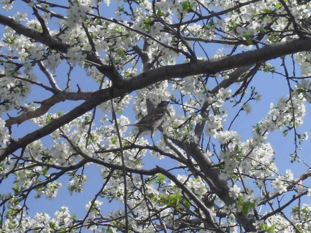 весна, поздравления, радость, счастье, любовь, цветы, красота, с наступающим
