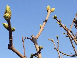 Первое незримое присутствие Весны.... Ярмарка Мастеров - ручная работа, handmade.