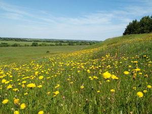 Рязанские просторы и ... любуемся, дышим полной грудью и заготавливаем травы.   Ярмарка Мастеров - ручная работа, handmade