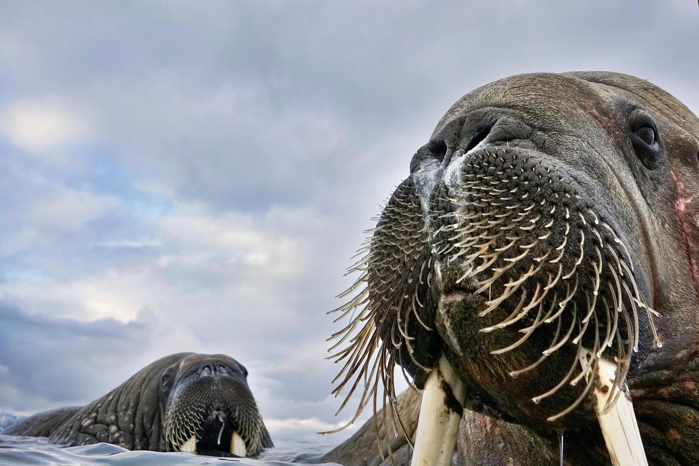 Лицом к лицу с дикой природой: названы победители Wildlife Photographer Of The Year 2018
