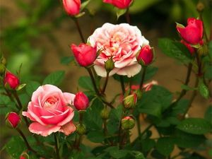 В зарослях роз. Комод можно покупать! | Ярмарка Мастеров - ручная работа, handmade