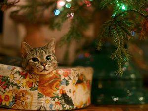 Скоро-скоро Новый Год!!! Праздник к нам приходит! 4 Приза от