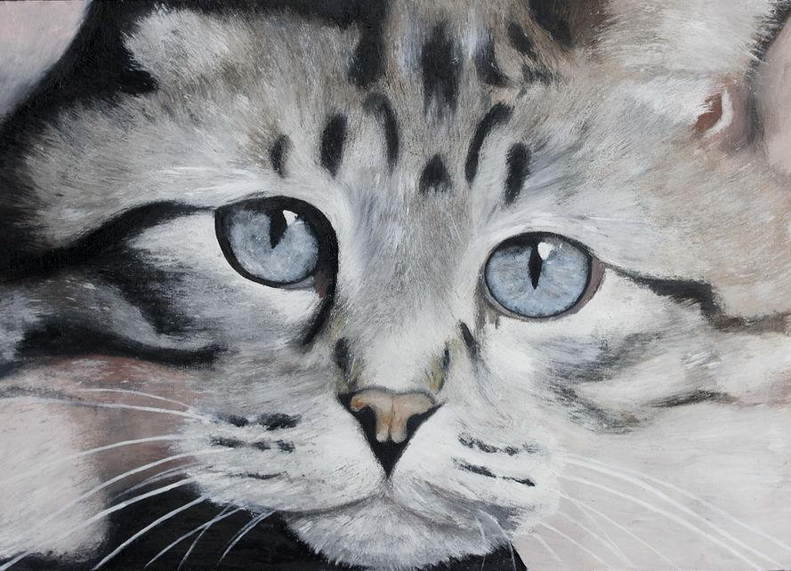 кошка, черно-белая картина