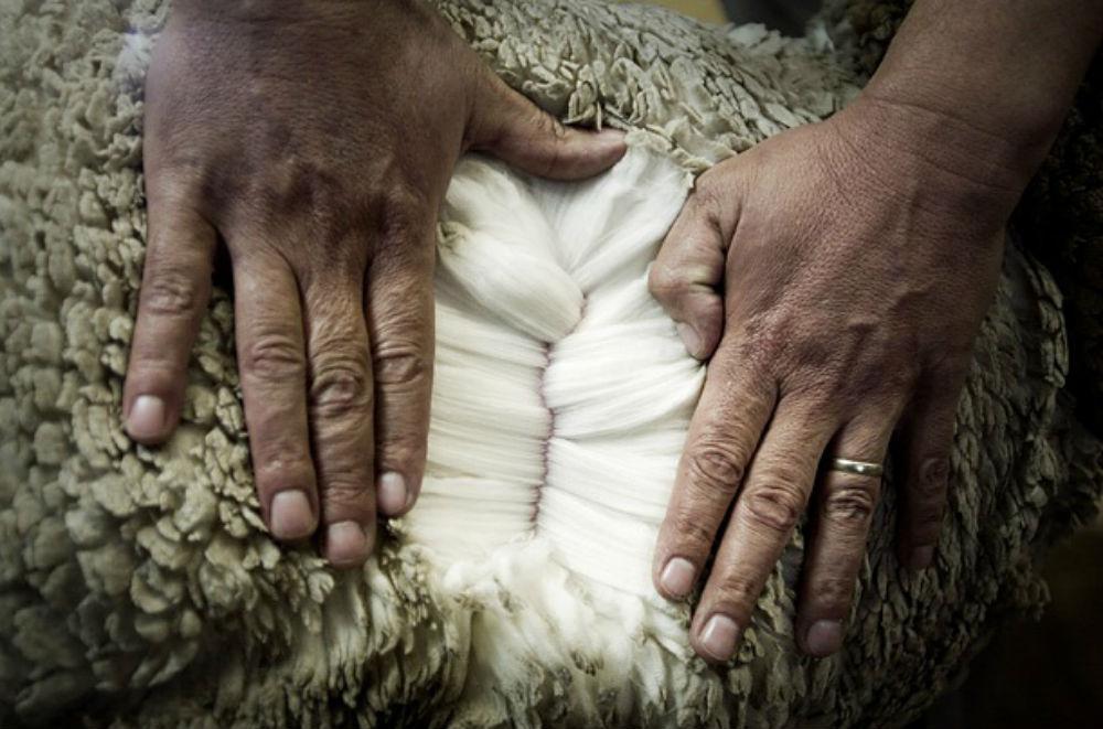 меринос, вязание спицами